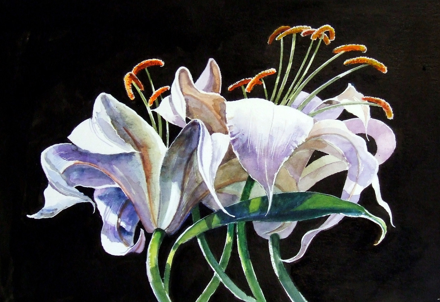Watercolor Lily on black by Anne Farrall Doyle