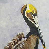 Oil painting  Gus the Pelican by Barbara Haviland