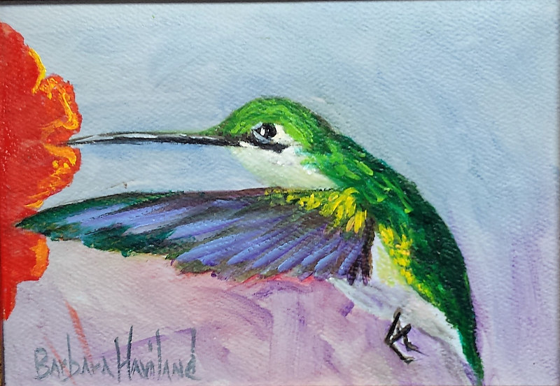 Oil painting Hummingbird by Barbara Haviland