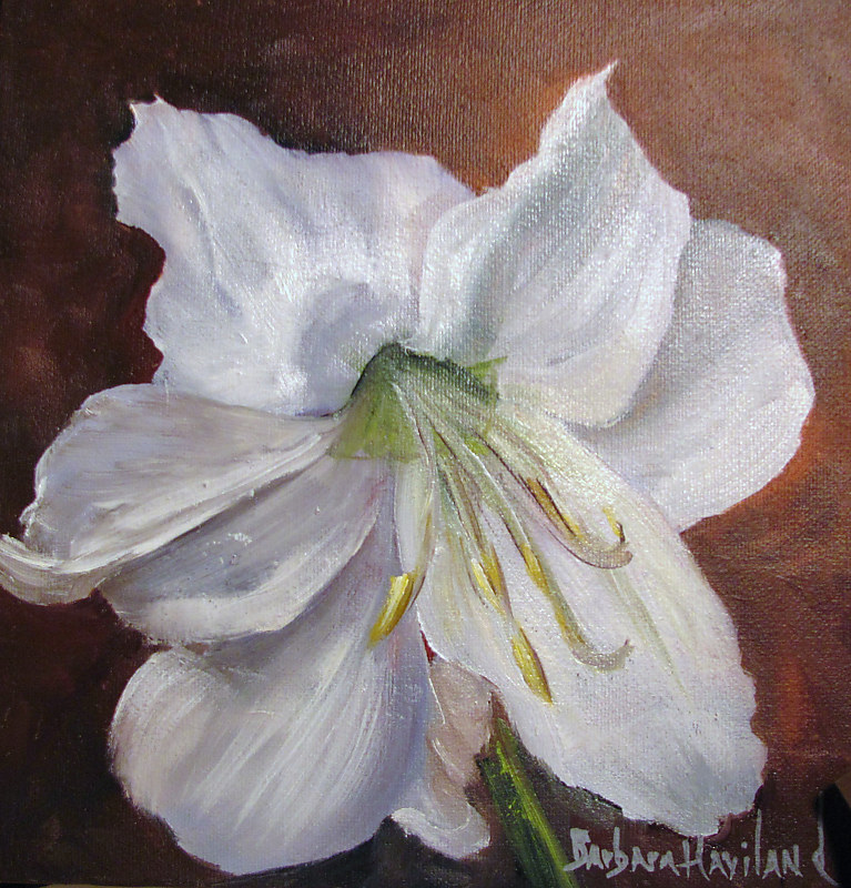 Oil painting  White Amaryllis by Barbara Haviland