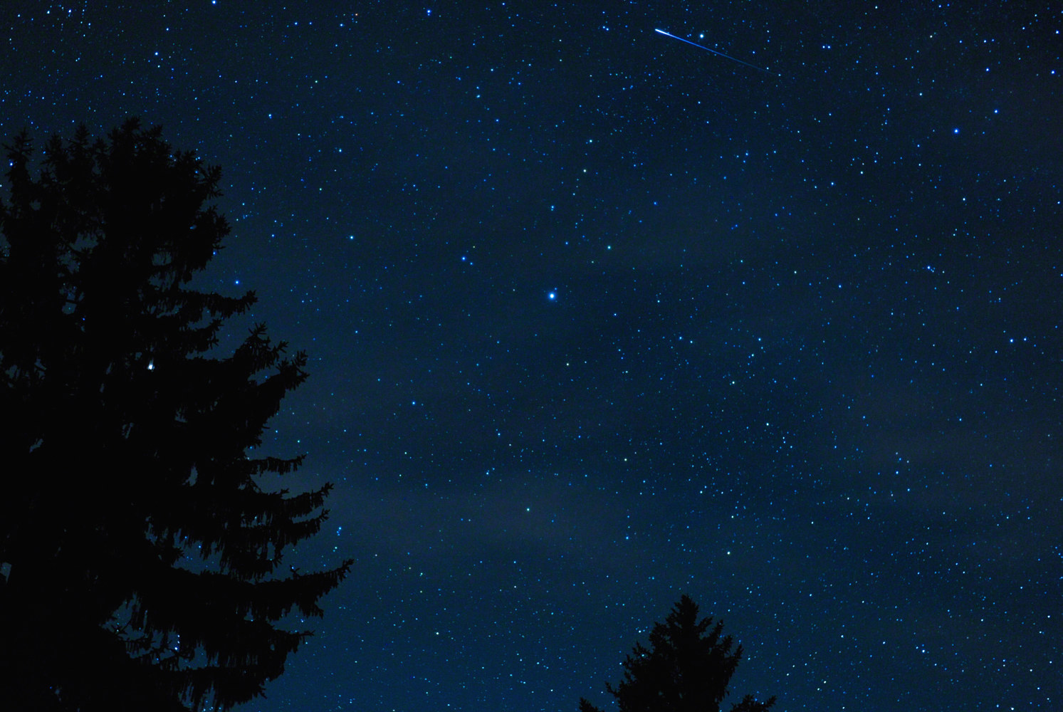North Star & Perseid Meteor by Dawn Reilly
