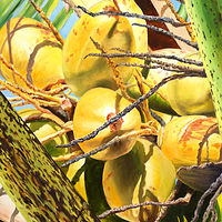 Oil painting Cocoanuts by Richard Ficker