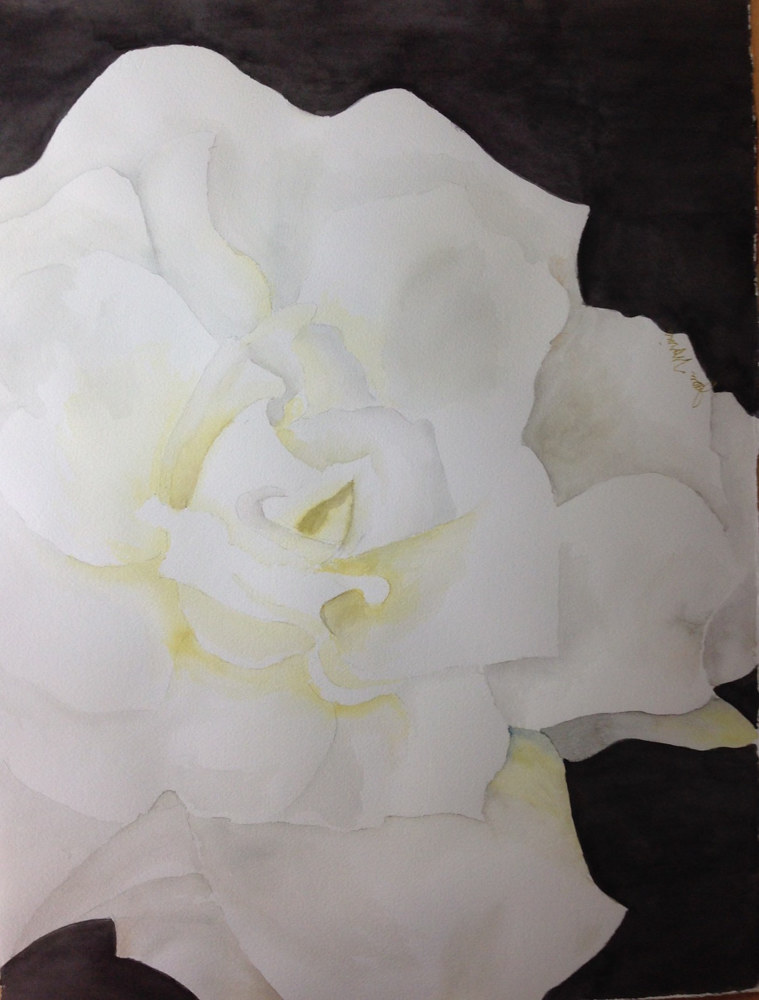 Watercolor White Rose by Joan Morris