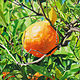 Acrylic painting TANGERINE by Art Carrillo