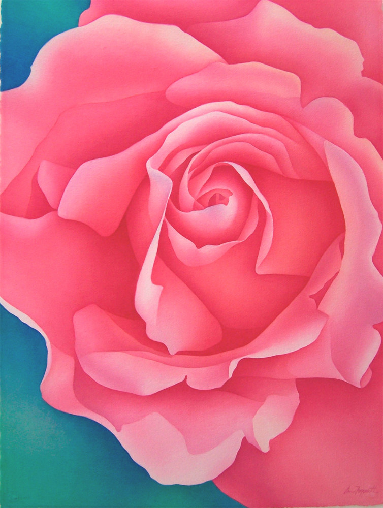 Watercolor Pink Rose by Anne Popperwell