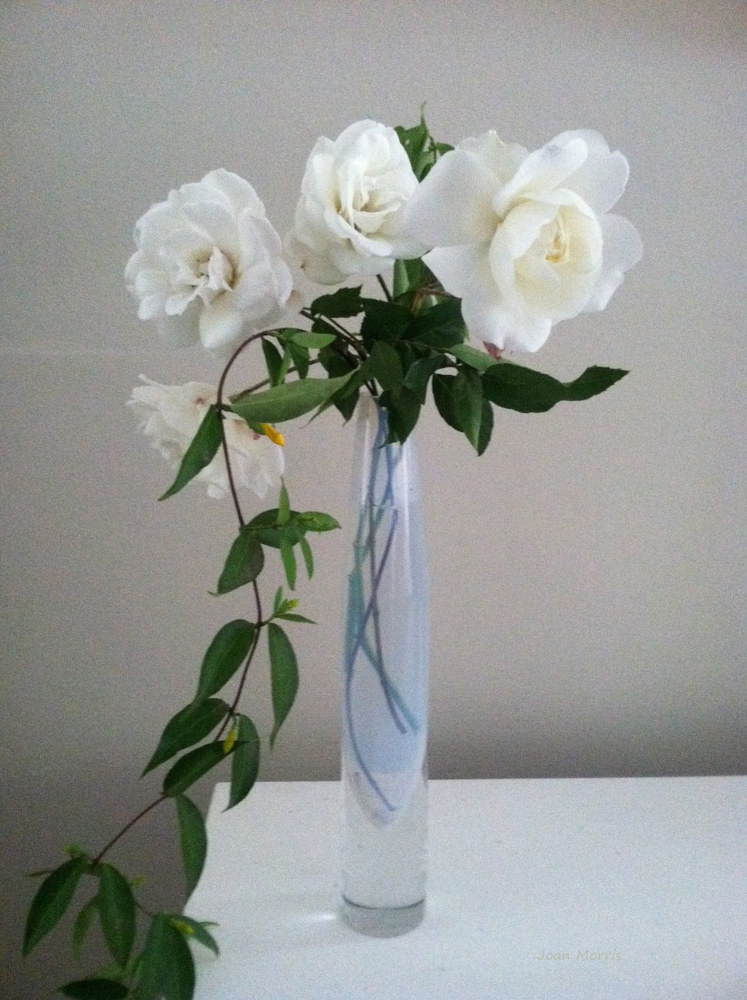 Photography White Rose Arrangement by Joan Morris