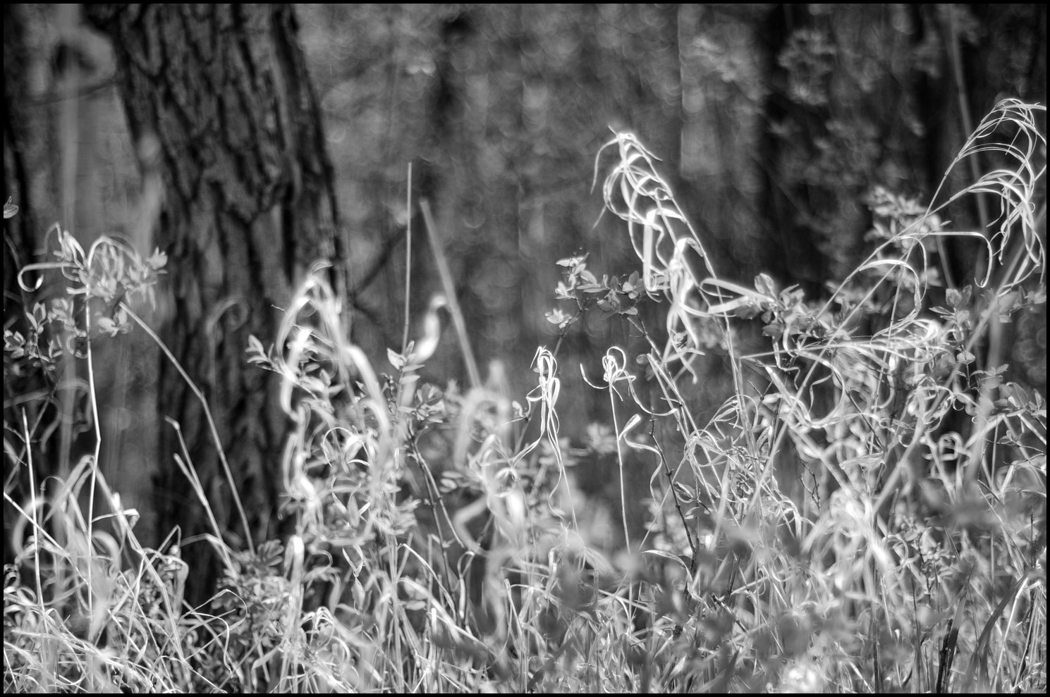 AAA_4919-Edit B&W Grass for web by Jim Friesen