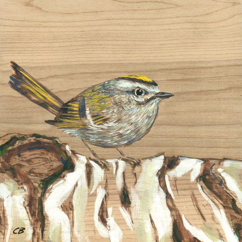 Print C-139 Kinglet by Cody Blomberg