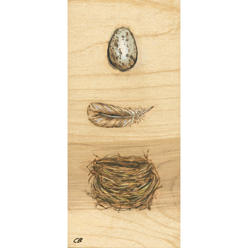 Print Egg_Feather_Nest by Cody Blomberg