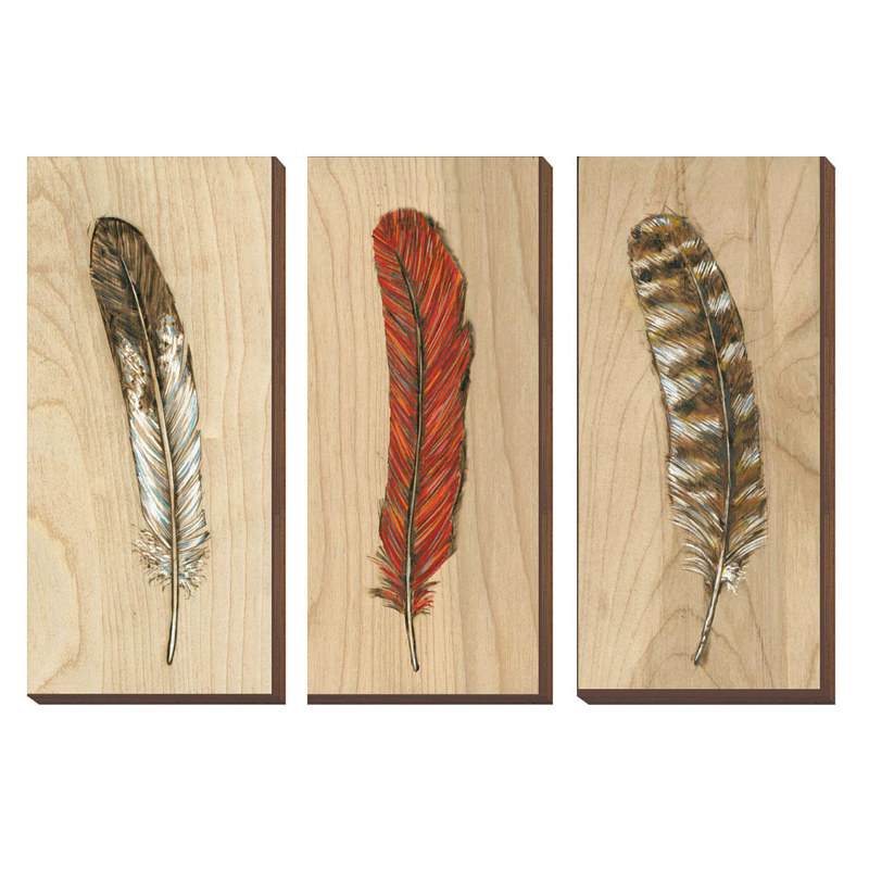 Print Eagle, Cardinal, Spotted Owl Feathers by Cody Blomberg