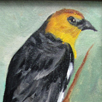 Oil painting Yellow Hooded Black Bird by Barbara Haviland
