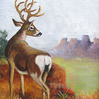 Oil painting White Tail Deer by Barbara Haviland