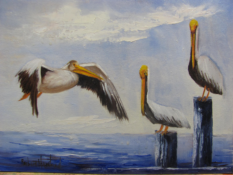 Oil painting  Three Pelicans by Barbara Haviland