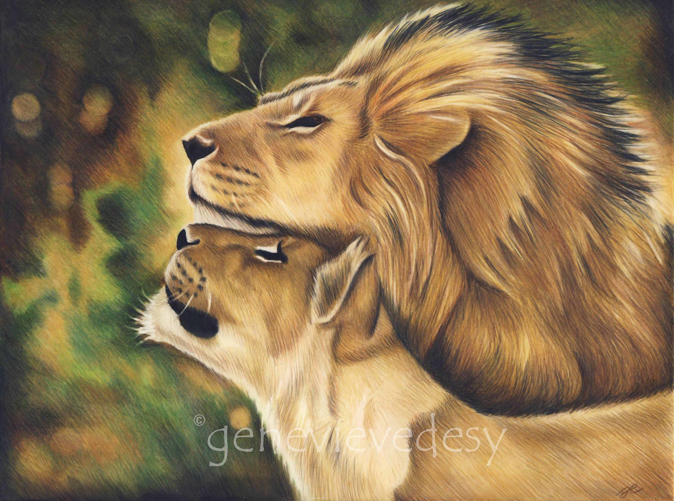Lions, 2013 by Genevieve Desy