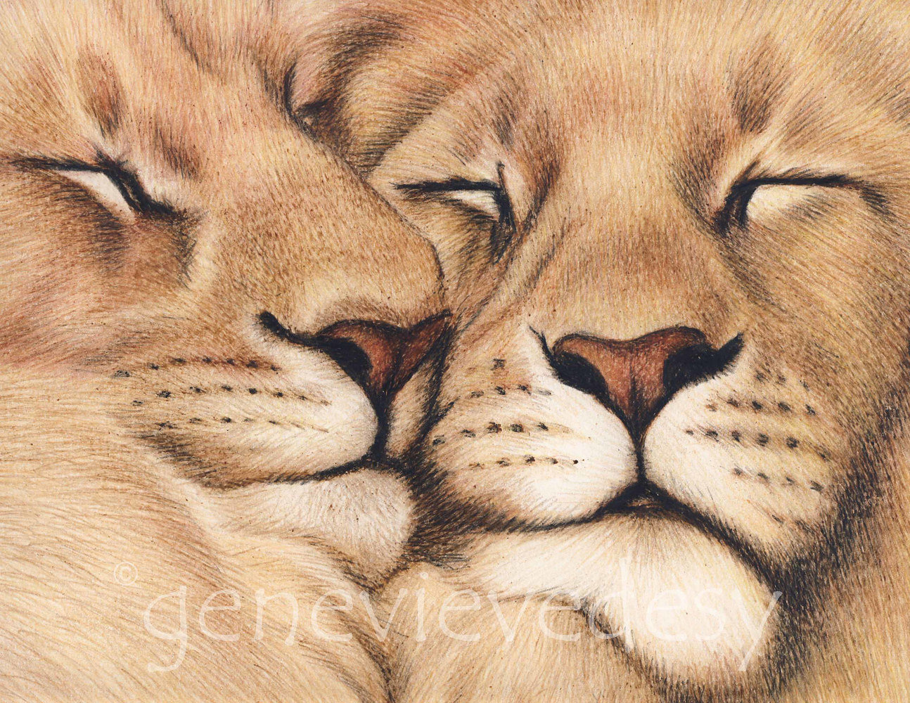 Lions en amour, 2013 by Genevieve Desy
