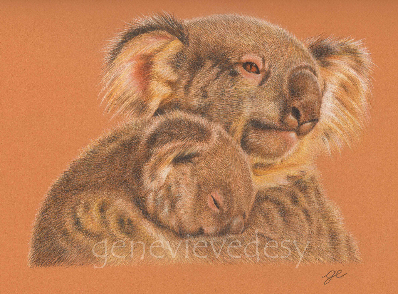 Koalas, avril 2014 by Genevieve Desy