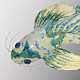 Cream & Blue Butterfly Koi by Cathy Crain