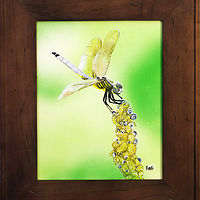 Acrylic painting Dragon Fly Acrylic and Airbrush on Bord-9x12 by Frans Geerlings