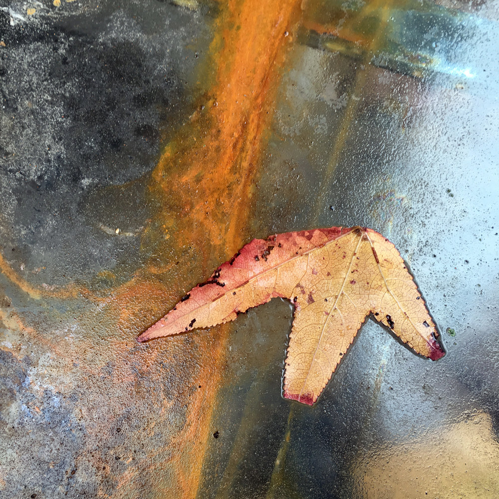Leaf and Rust on Glass Table - Mom's house - St. Louis, MO by Edward Bock