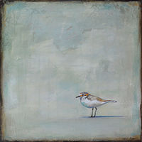 Acrylic painting Sandpiper by Sally Adams