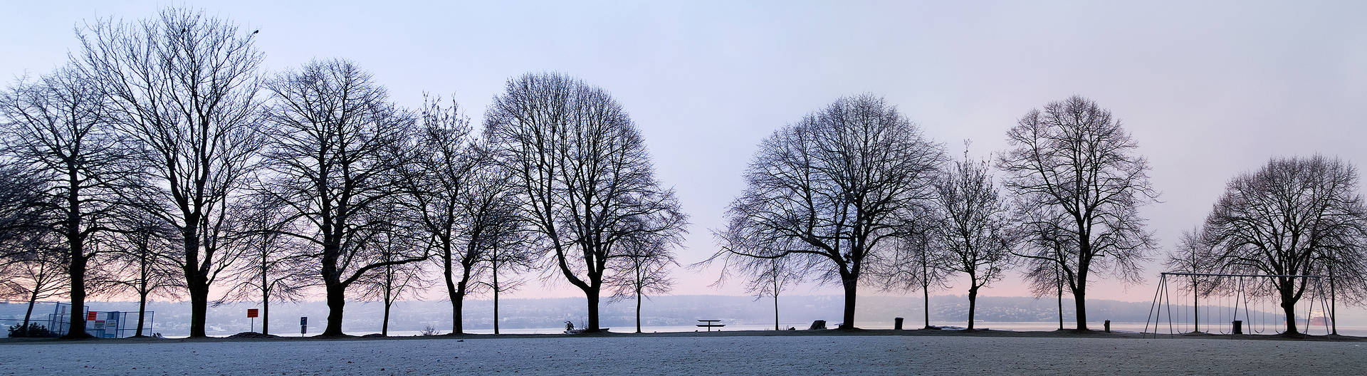 Stanley Park Trees 1 by Jim Friesen