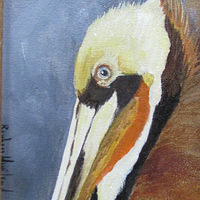 Oil painting  Pelican  Sweet Face by Barbara Haviland