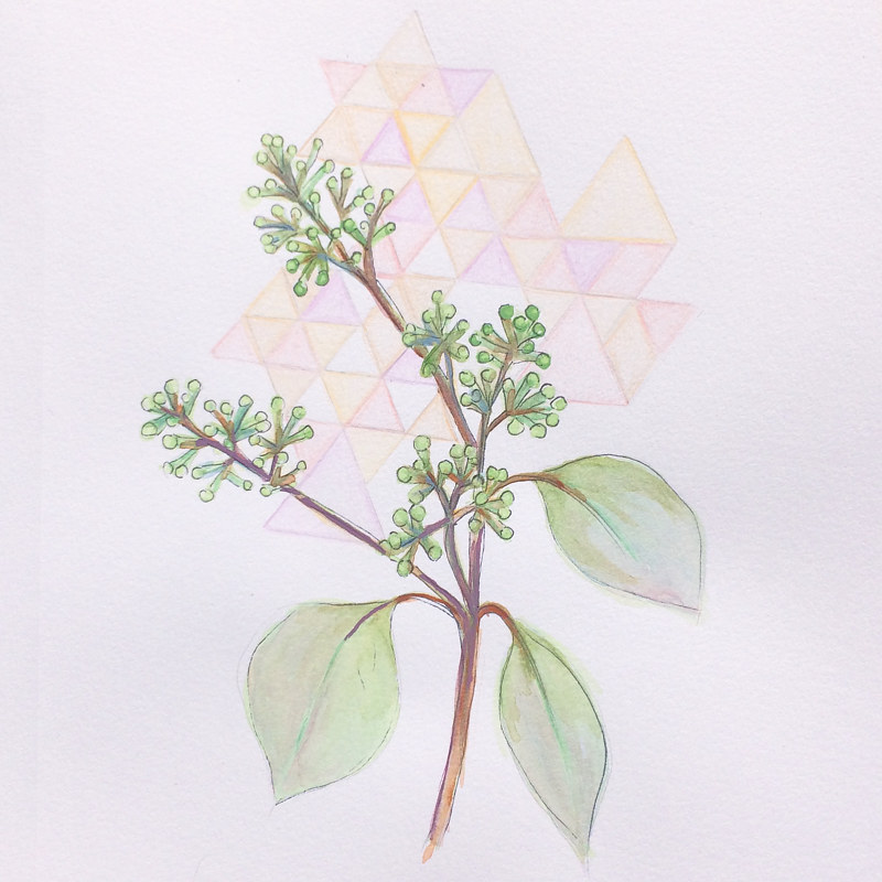 Watercolor Seeded Eucalyptus by Julie Gladstone