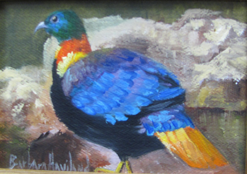 Himayln Monal  Bird by Barbara Haviland
