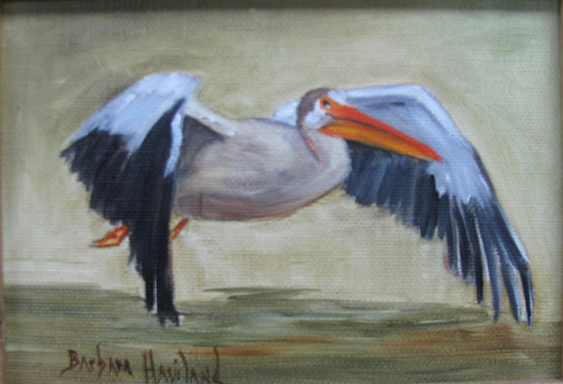 Pelican in Flight by Barbara Haviland