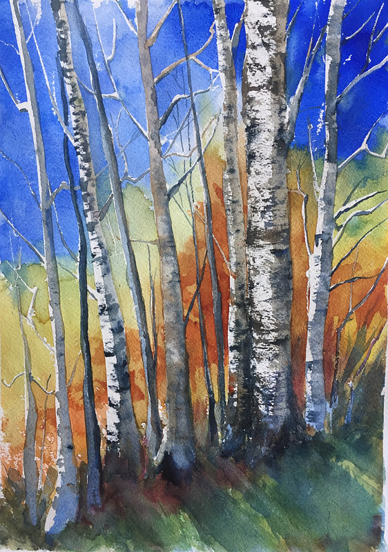 Watercolor Birch Trees in Fall by Betty Ann  Medeiros