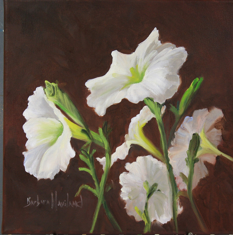 Oil painting  White Petunias, oils on gallery wrap canvas by Barbara Haviland