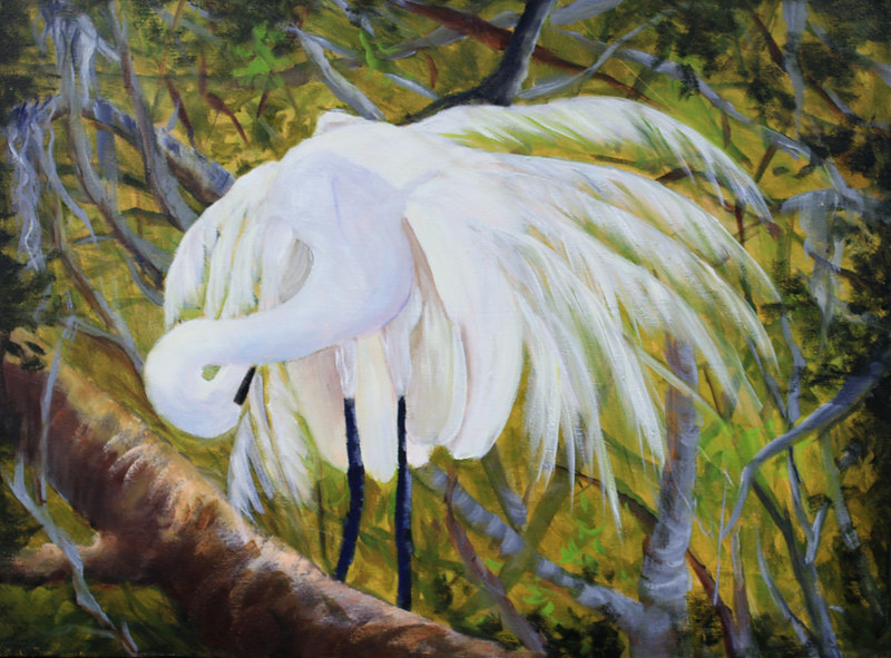 Oil painting Pretty Boy Egret Preening, oils on canvas by Barbara Haviland