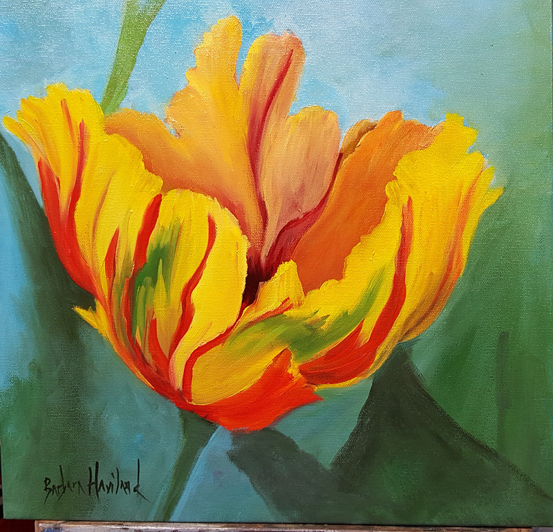 "Oil painting Parrot Tulips, oils on canvas, 12""x 12"" by Barbara Haviland"