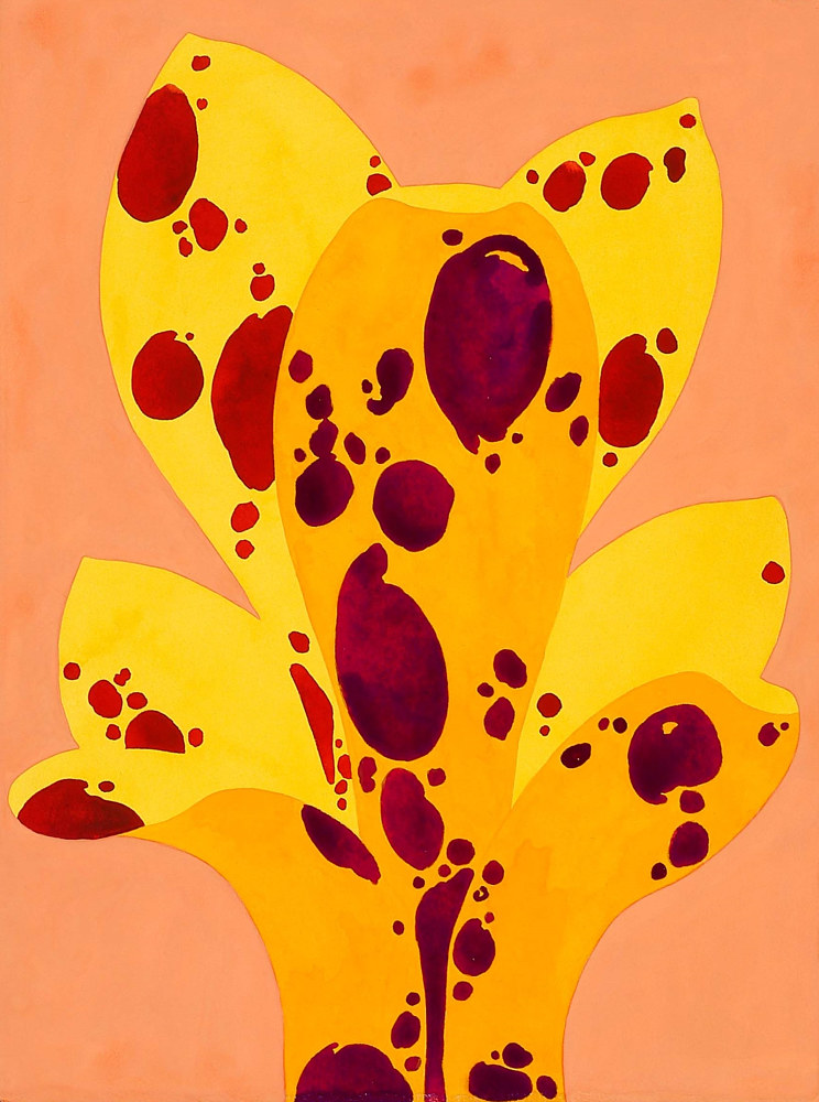 Drawing Primrose Yellow Fountain by Laurie Flaherty