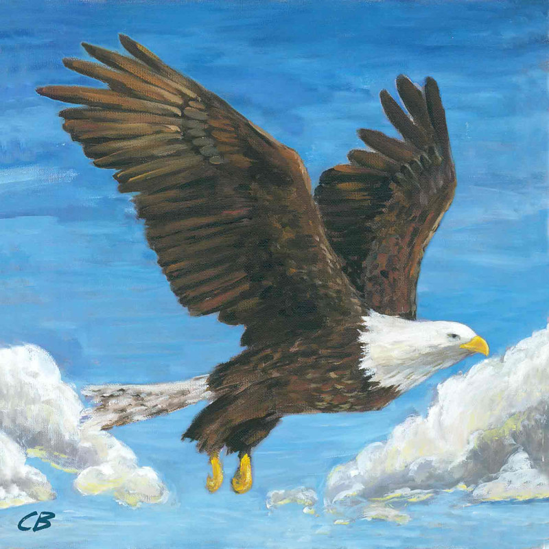 Print C-158 BALD EAGLE by Cody Blomberg