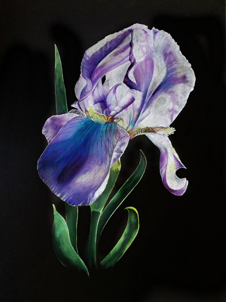 Photography Iris by David Neace