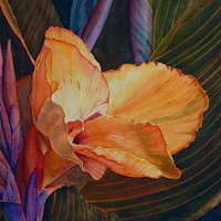 Watercolor Canna Lily 'Durban' by Jane Crosby