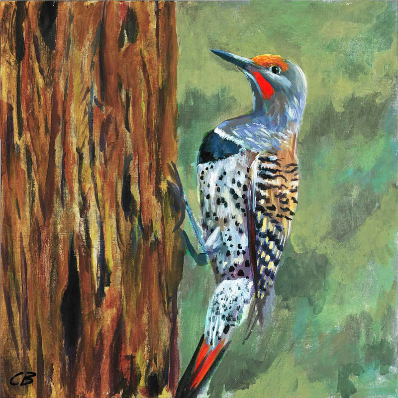 C167 Flicker by Cody Blomberg