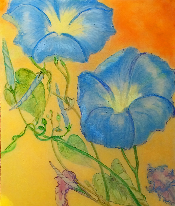 morning glories by Frederica  Hall