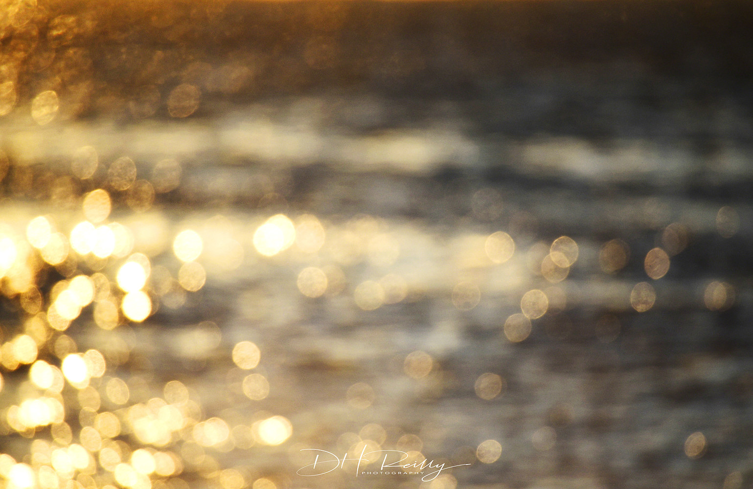 Early Morning Bokeh by Dawn Reilly