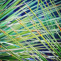 Photography Overlapping Palm Fronds by Jacqueline Bell johnson