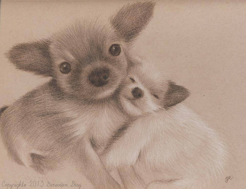 Chiens migons / Cute dogs, 2013 by Genevieve Desy