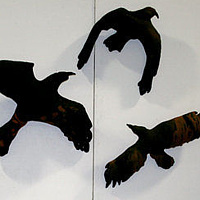 display of ravens, wolves and bears by Belinda Harrow