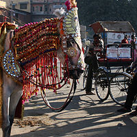 colourful India by Belinda Harrow
