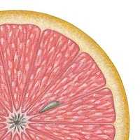 Print Grapefruit by Sue Ellen Brown