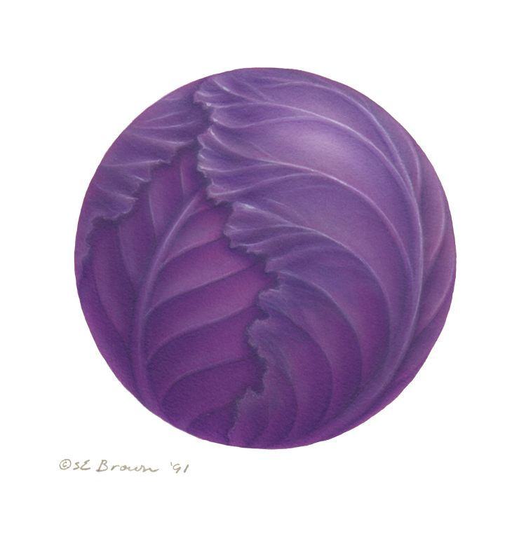 Print Purple Cabbage by Sue Ellen Brown