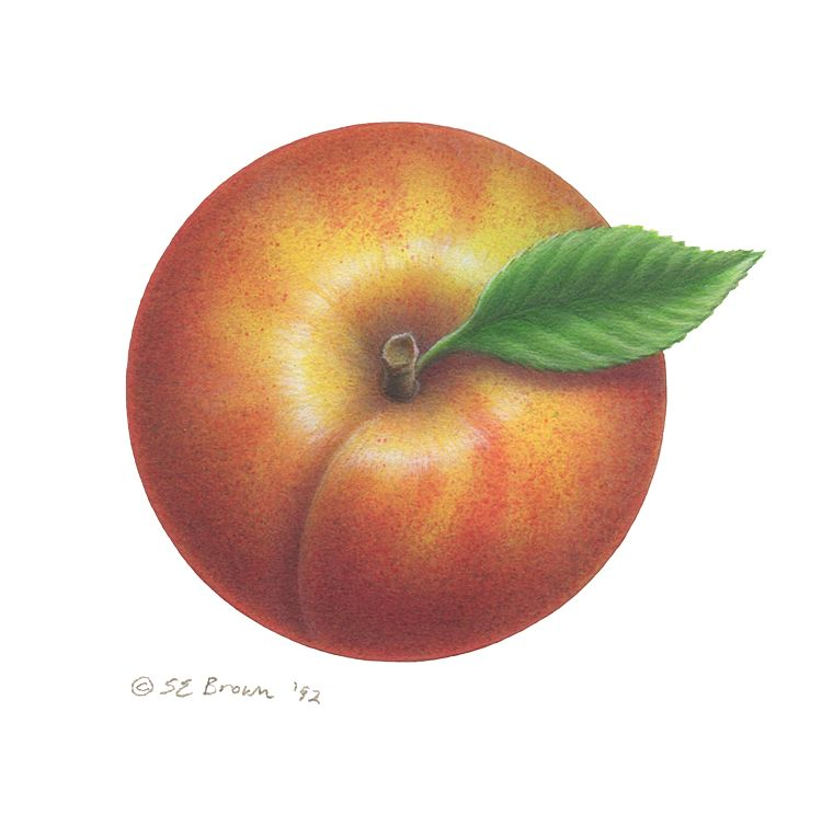 Print Peach by Sue Ellen Brown