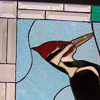 Pileated Woodpecker by Evi Cundiff
