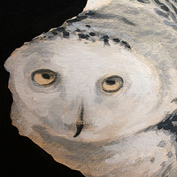 Snowy Owl detail by Belinda Harrow