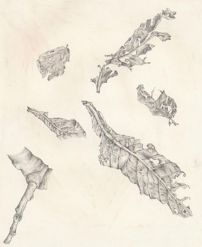 oldleafstudy by Richard Mountford